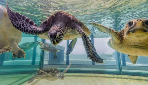 新・足摺海洋館 SATOUMIの割引券やクーポンを使ってお得に楽しむ方法!